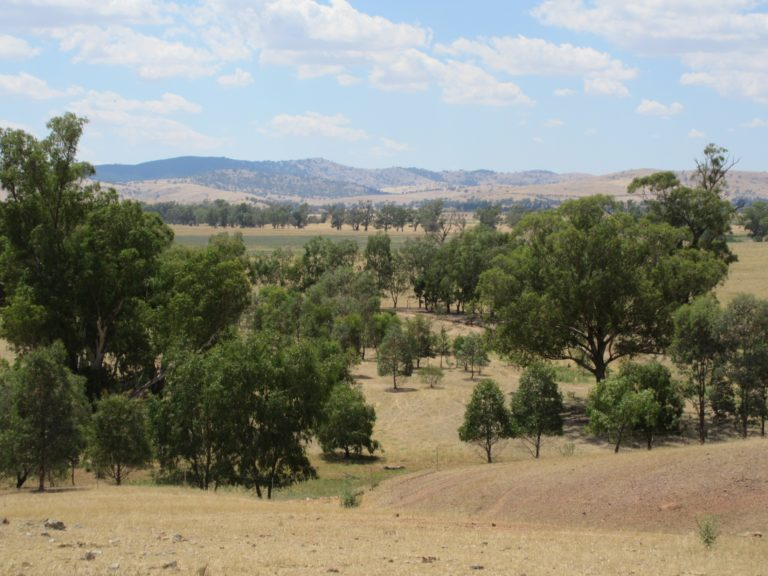 Linking areas of native vegetation on farm lands