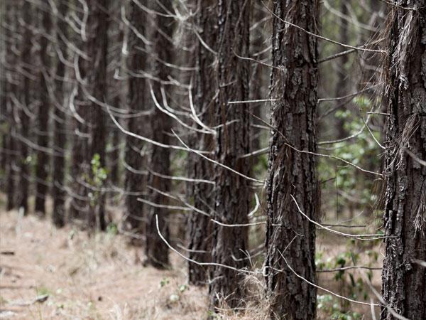 Reforestation offers long-term soil carbon benefits