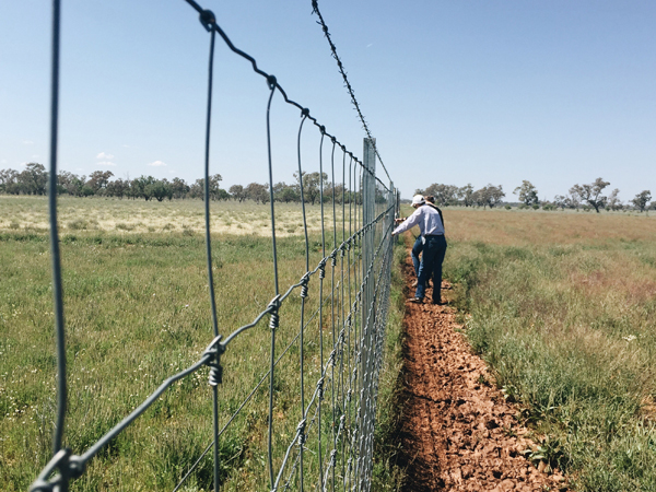 Exclusion fencing brings real savings and sleep
