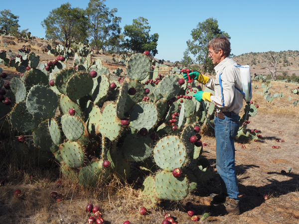 Mapping a 'wheely prickly' problem