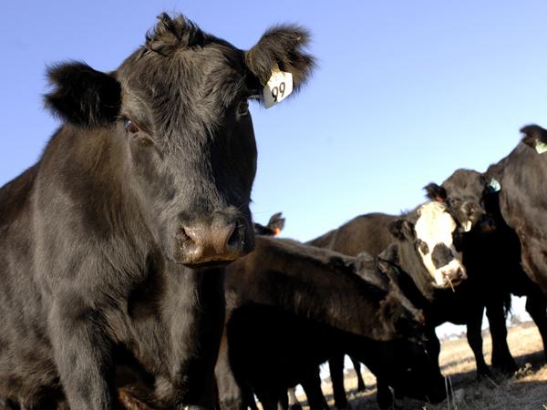 Biosecurity essentials for buying livestock