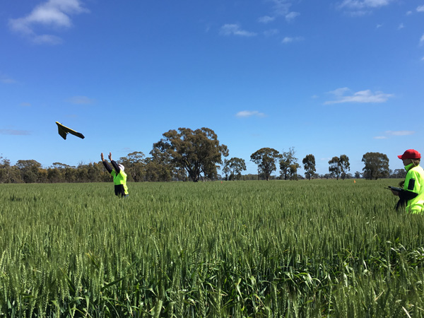 Mallee variable fertiliser rates under scrutiny