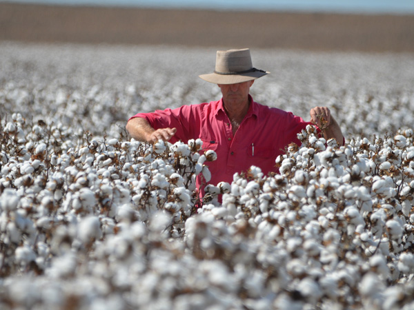System upgrade boosting best practice in the cotton industry