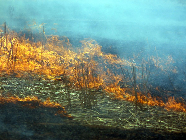 Traditional Aboriginal burning in modern day land management