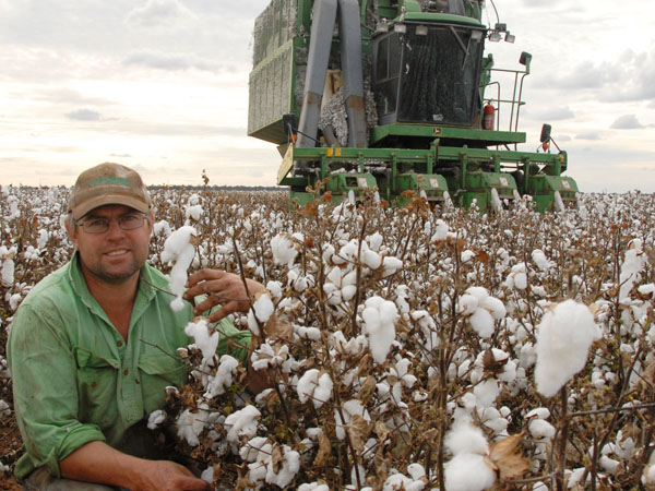 The economic and environmental rewards for cotton growers