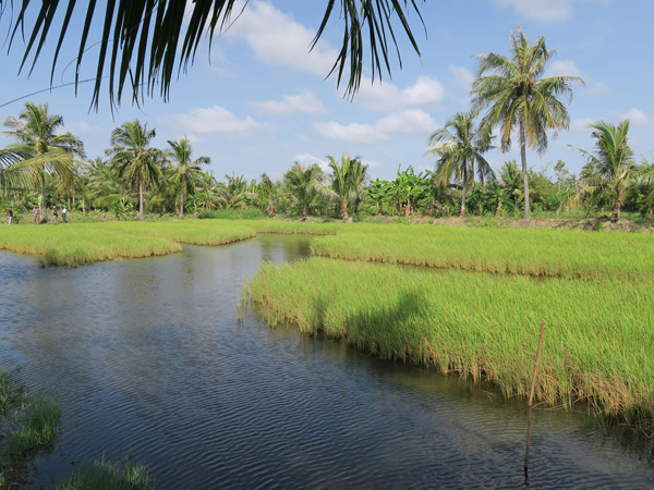 Australian research guides climate change adaptation in the Mekong Delta