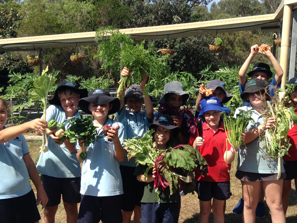Bush tucker, butterflies and a bumper harvest!