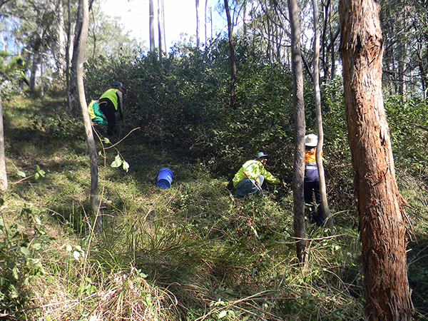 Landcare groups work together in Queensland to tackle major weeds issue