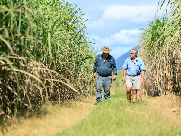 Sugar partnership accelerates practice change