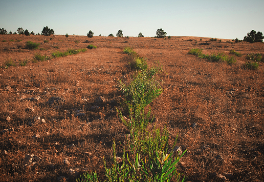 Landcare Australia's direct seeding lines from 2016 are thriving on Dakalanta Wildlife