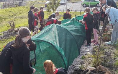 Dung beetle breeding brings schools together