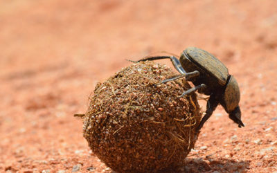 Manjimup farmer employing dung beetle to tackle climate-change set to represent WA on national stage