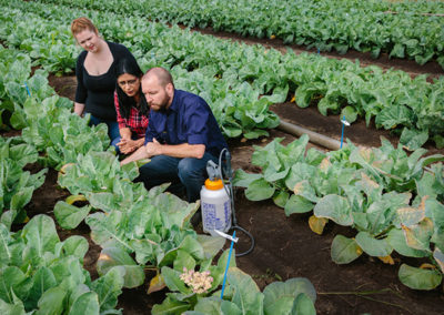 More sustainable crops just a spray away