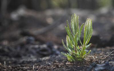 Landcare Australia Bushfire Recovery Grants 2020