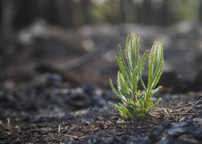 Fire retardant rainforest revegetation and native wildlife feeding just some of the projects receiving support from Landcare Australia's $300,000 bushfire recovery grants