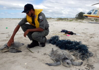 Group protecting Arnhem Land turtles from 'highest densities of plastic pollution' set to represent NT