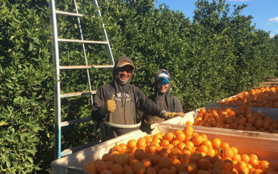Reducing orchard emissions while cutting electricity bills