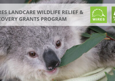 WIRES and Landcare Australia announce $1million partnership to support regeneration of wildlife habitat impacted by bushfire