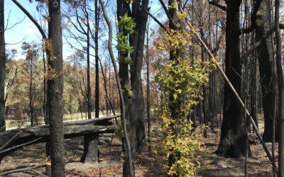 Bushfire recovery webinar