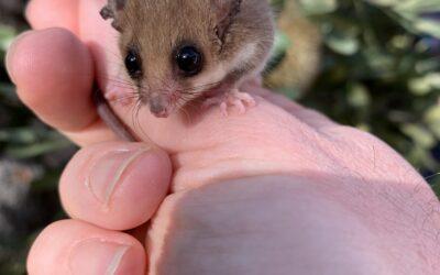 Growing habitat for threatened species